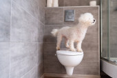 Photo Havanese dog standing on toilet in bathroom