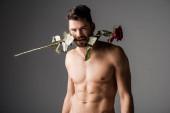 sexy nahota muž držení růže květiny v zubech na šedé