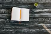 shora pohled na prázdný notepad, tužku a šťavnatý na tmavém dřevěném povrchu