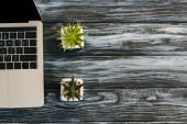 top view laptop és a ház növények sötét fa felületen