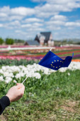 oříznutý pohled na muže držícího vlajku Evropy poblíž barevného tulipánového pole
