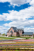 Photo house near colorful tulips field with blue sky and clouds