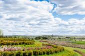 krajina s travnatým polem a keře proti modré obloze a mraky