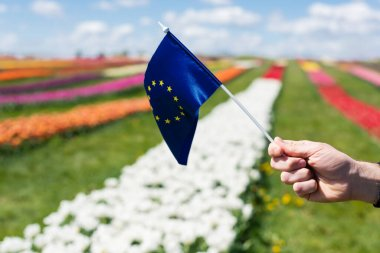 Cropped view of man holding flag of Europe near colorful tulips field and blue sky with clouds stock vector