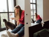 koláž mladé ženy ukazuje prstem na okno v blízkosti roztomilé kočky