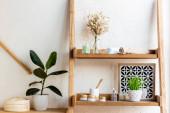 Fotografie Holzregale mit blühenden Kätzchen, Handtuchrollen, Zahnbürsten, Behältern und Flaschen in der Nähe grüner Pflanzen in Blumentöpfen
