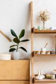 Holzgestell mit blühenden Kätzchen, Handtuchrollen, Zahnbürsten, Kräutertüten, Gefäßen und Flaschen in der Nähe grüner Pflanzen in Blumentöpfen