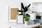 zelené rostliny, rámy a lampy na bílém konferenčním stolku v blízkosti malby v moderním bytě
