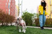 gyönyörű nő orvosi maszk séta kínai crested kutya a parkban