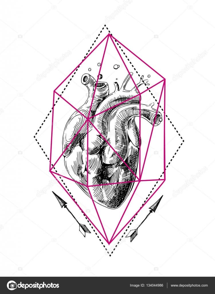 bosquejo del corazón humano — Archivo Imágenes Vectoriales ...