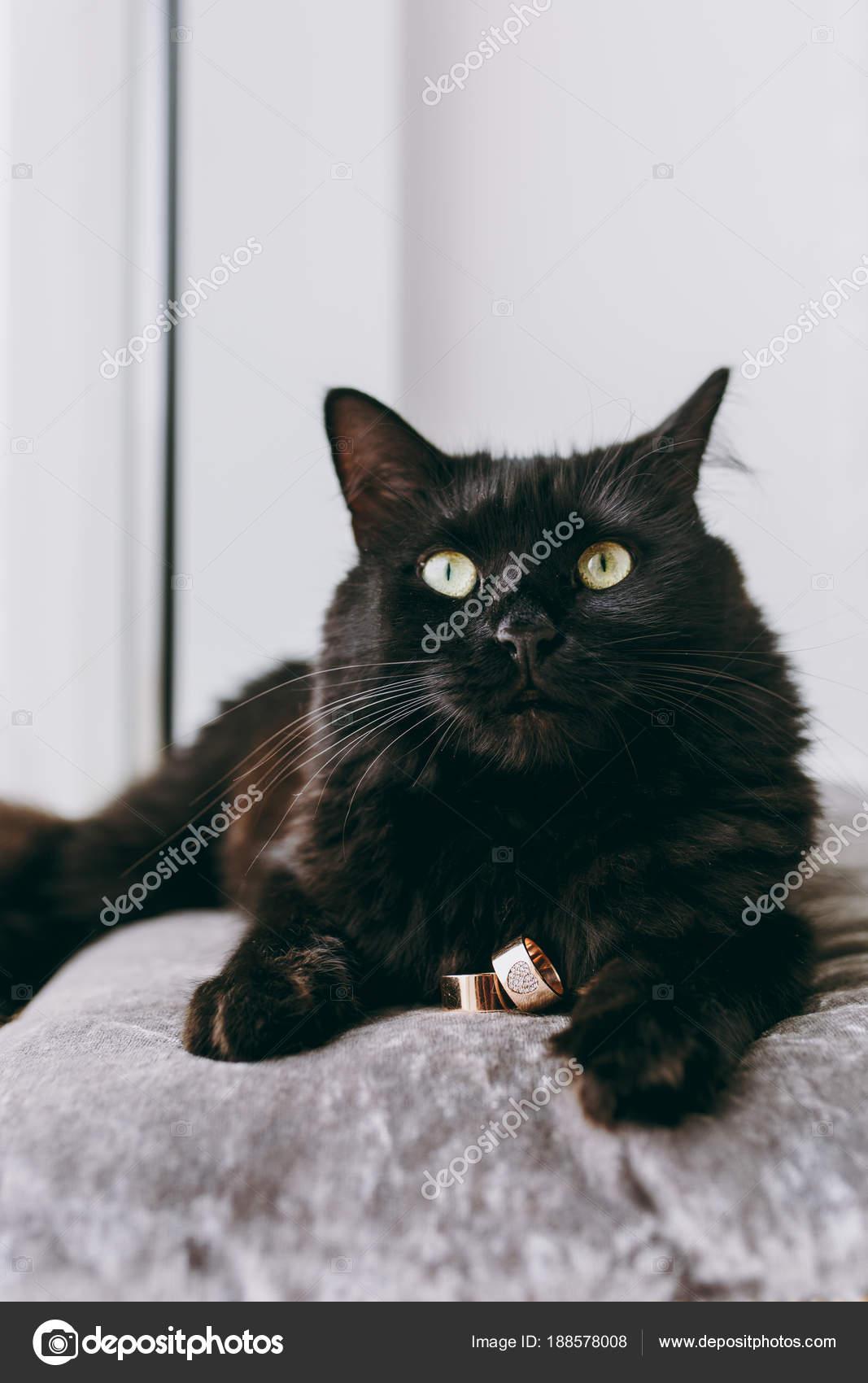 Široké kočičí fotografie