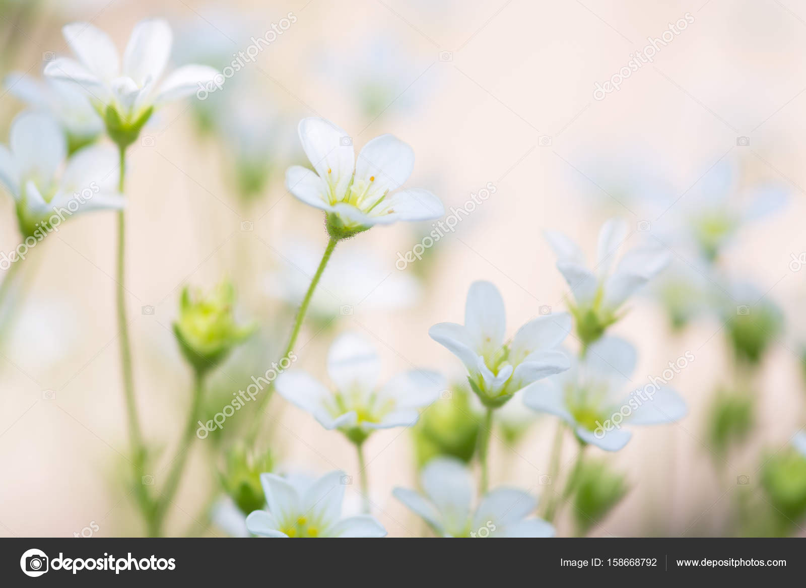 Small White Flowers On A Delicate Pink Background Artistic Image Of