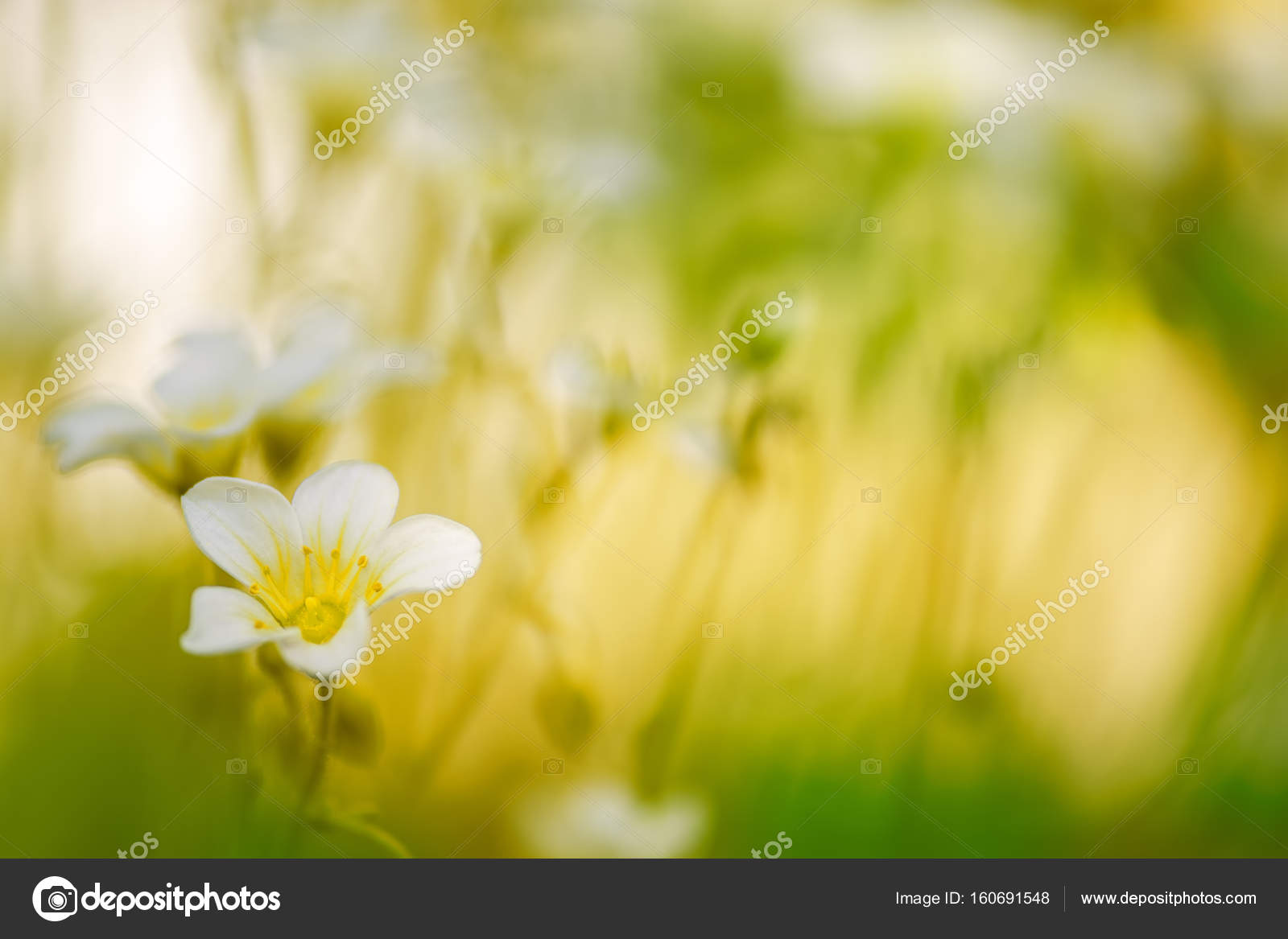 Small White Flowers In The Grass On A Beautiful Background Stock