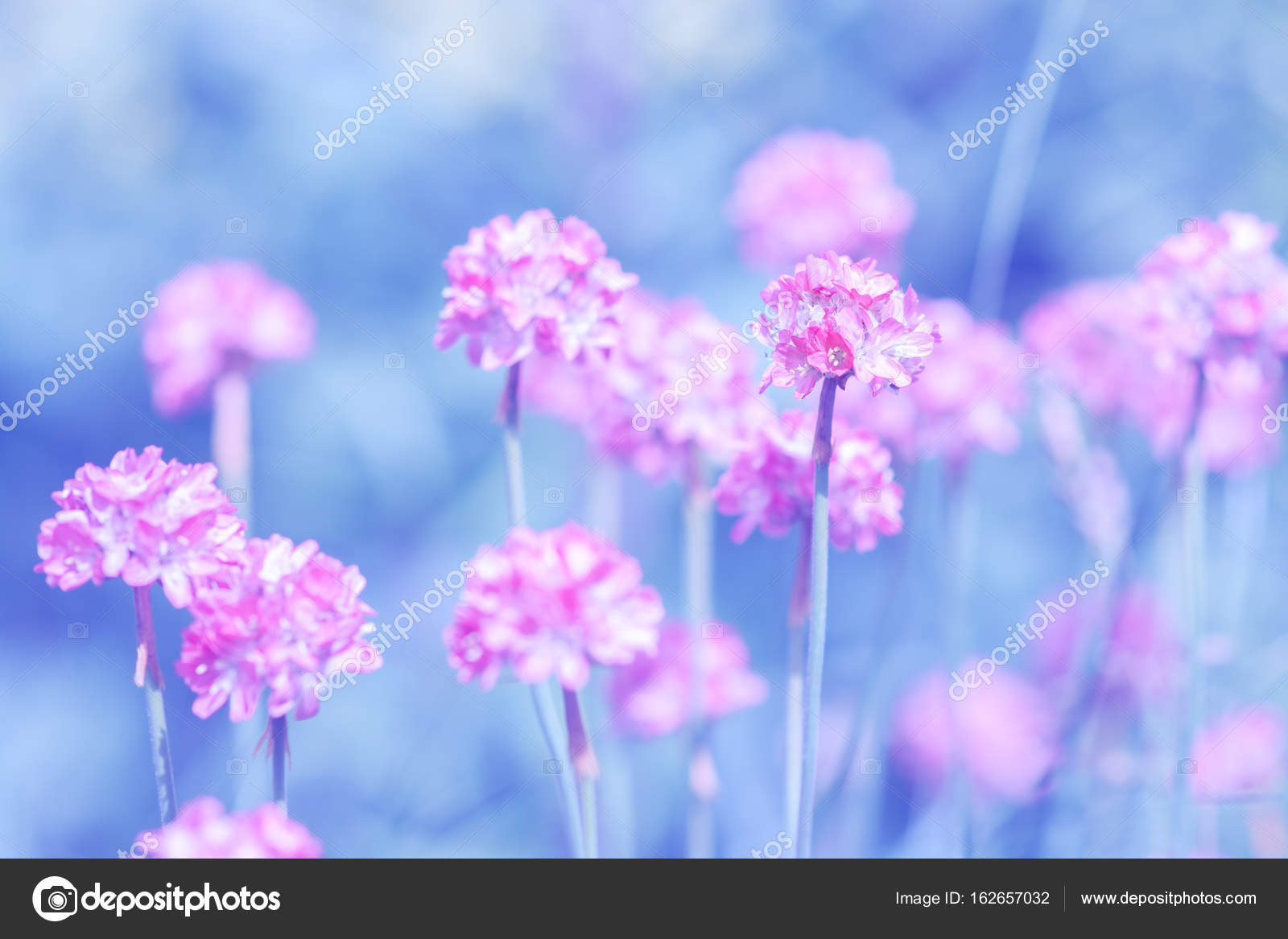 Small Pink Round Flowers On A Blue Background Artistic Image With