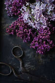 Photo Lilac and vintage scissors