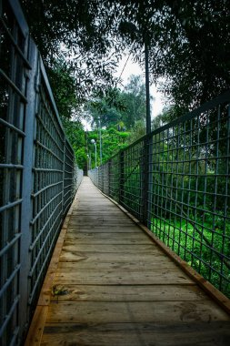 Narrow wooden suspension bridge with metal railings surrounded by thickets