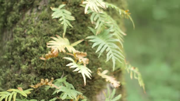 Fern growing on the tree trunk with moss on it. Blurry \ bokeh background.
