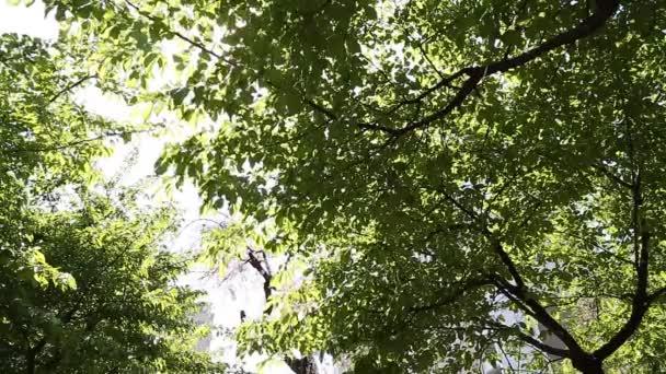 Listy se třepetají ve větru
