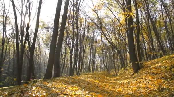 Juharfa zöld alá őszi parkban