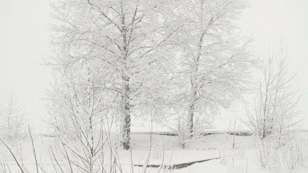 Schneefall auf einem Hintergrund aus schneebedeckten Bäumen