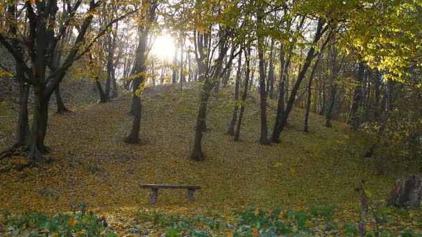 Autumn park with sunlight and falling leaves from trees with an empty bench