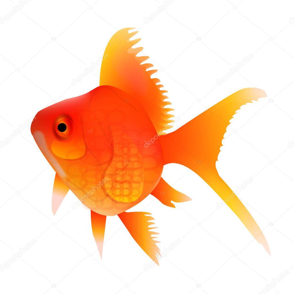 Золотая Рыбка Летом Красный Значок — Векторное изображение ...