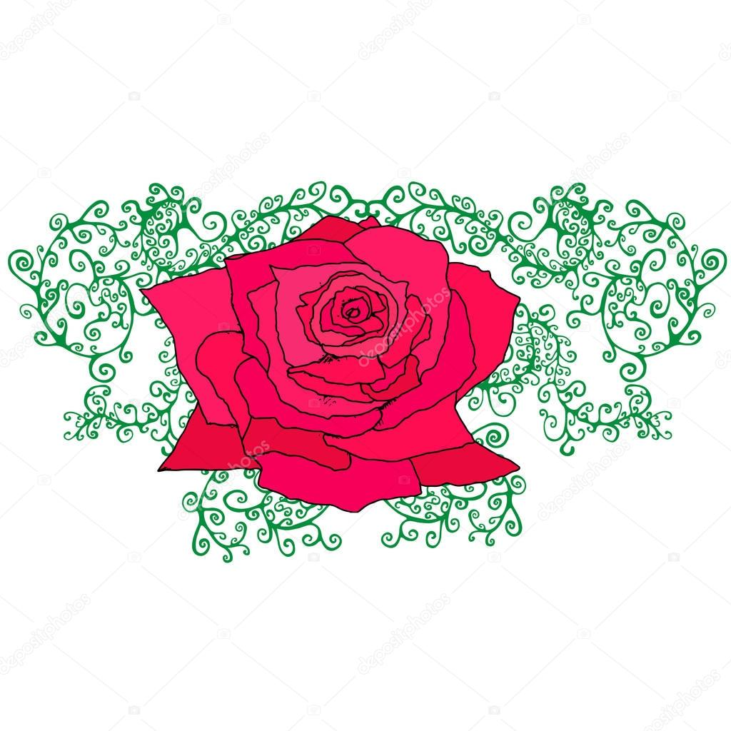 Red rose in branches, foliage, isolated white background