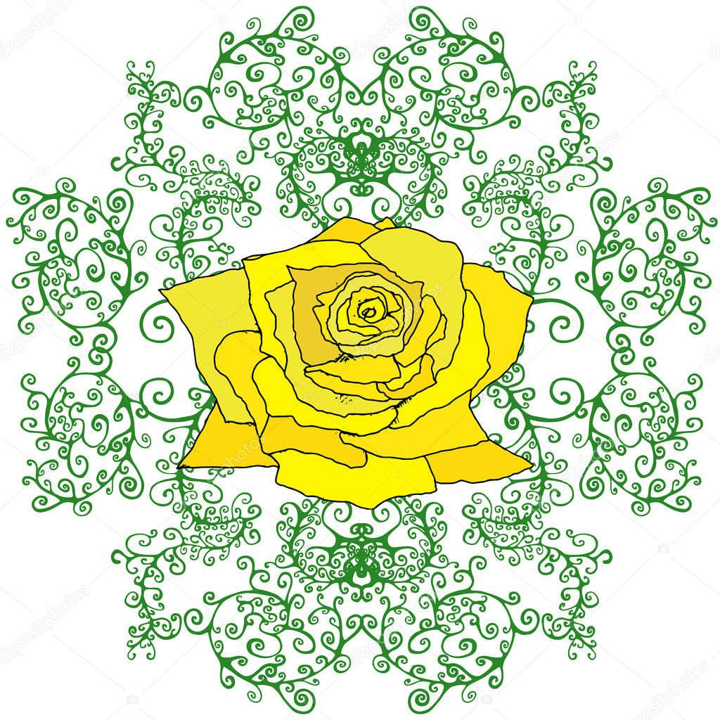 Yellow rose in branches, foliage, isolated white background.
