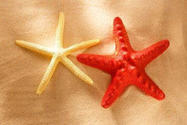 Red and white sea stars