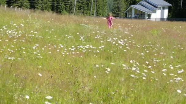 Dítě s heřmánkem polem v letní ráno