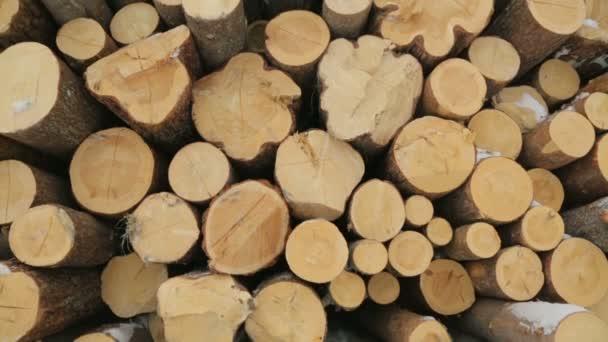 Velkou hromadu protokolů v zimě lese