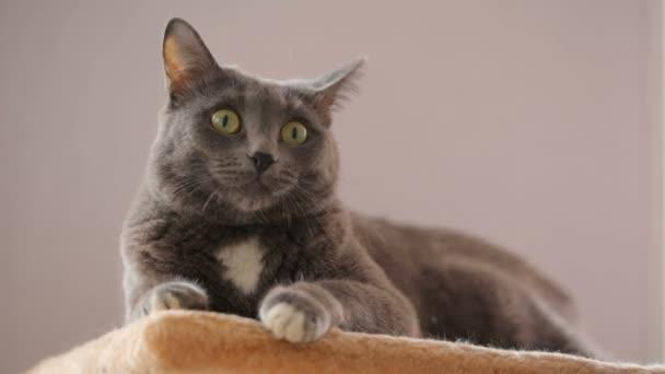 Kočka na jeho místo