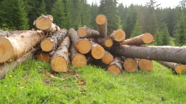 Celé dřevo klády na zelené trávě