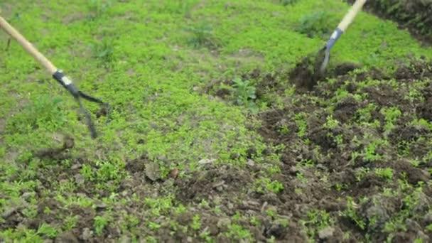 Weeding soil in the garden
