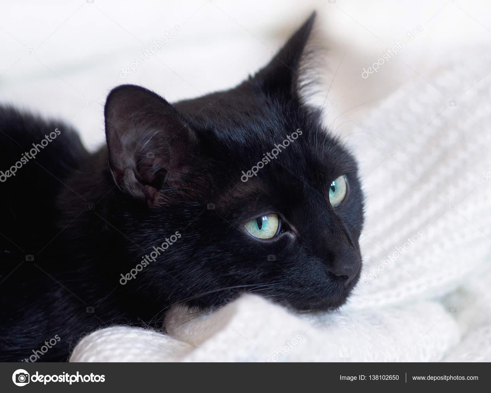 304bb3a8de07 Η γάτα έγκειται στα ρούχα — Φωτογραφία Αρχείου © klaudiafj  138102650