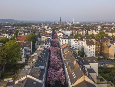 BONN, GERMANY - APRIL 21, 2018: Aerial view of Heerstrasse or Cherry Blossom Avenue