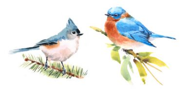 Titmouse and Bluebird Two Birds Watercolor Hand Painted Illustration Set isolated on white background
