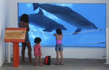 A Trio of Sisters Watch the Dolphins at Delphinario, Sonora, Mex