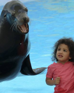 A Little Girl Listens as a Sea Lion Tells His Story at Delphinar