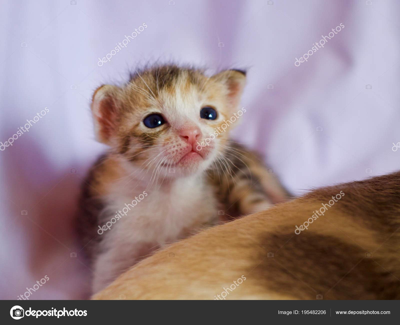 Kitten Cute Animals Kitten Cat Baby Cute Animal Stock Photo C Incubus 2525 Hotmail Com 195482206