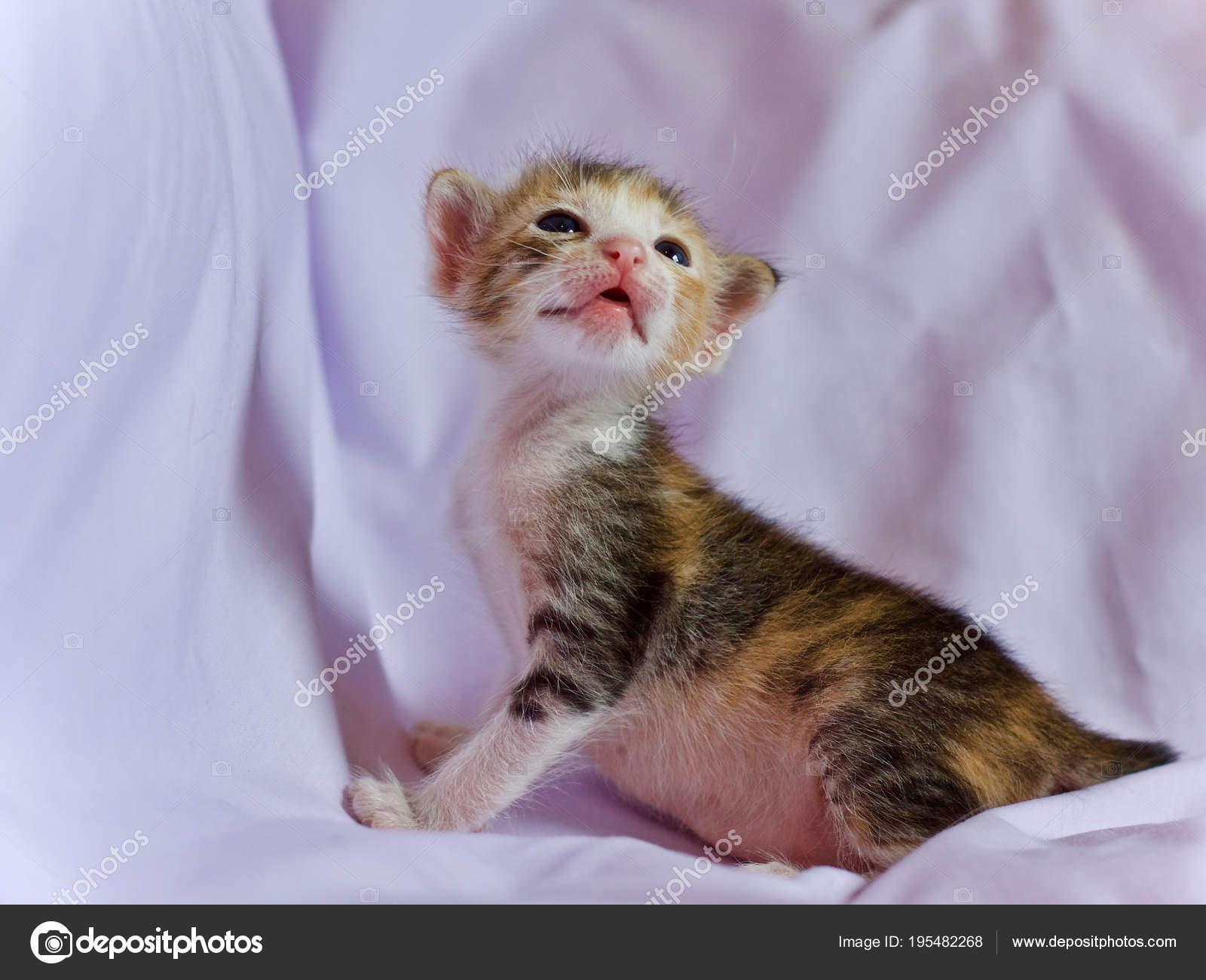 Baby Cute Kittens Kitten Cat Baby Cute Animal Stock Photo C Incubus 2525 Hotmail Com 195482268