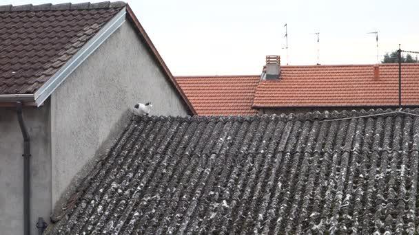 toit en amiante fibro ciment toit en amiante with toit en amiante que faire quand la mousse. Black Bedroom Furniture Sets. Home Design Ideas