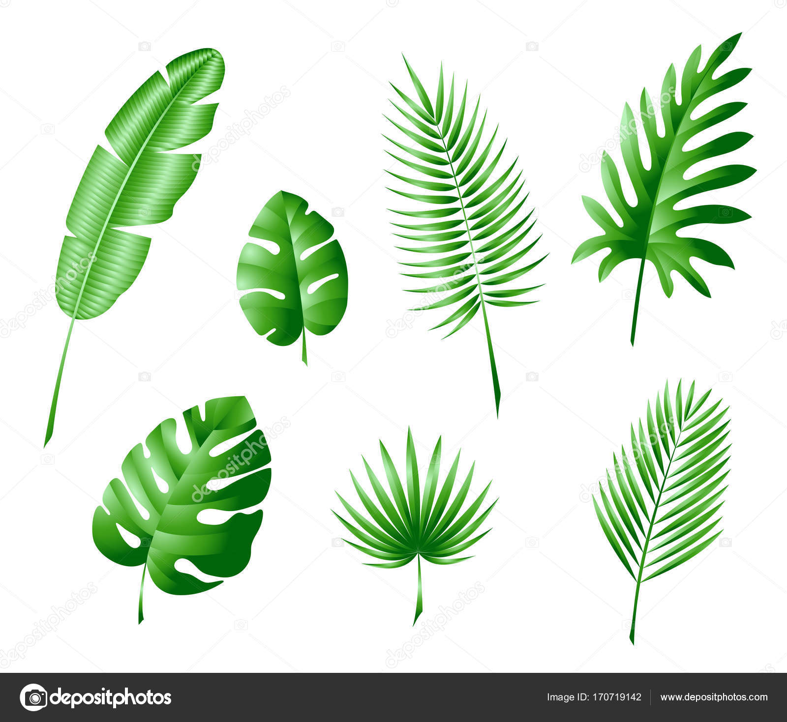 the leaves of tropical trees and palm trees color illustration ...