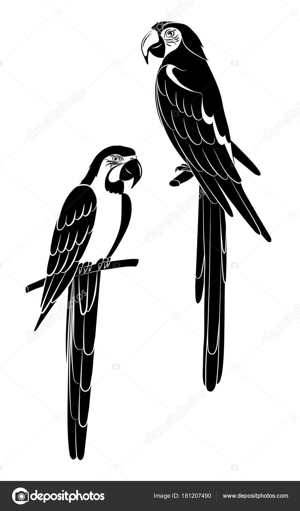 10 μαύρο πουλί