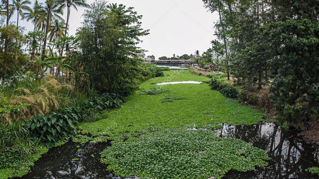 A river with the greenery in the Reunion island