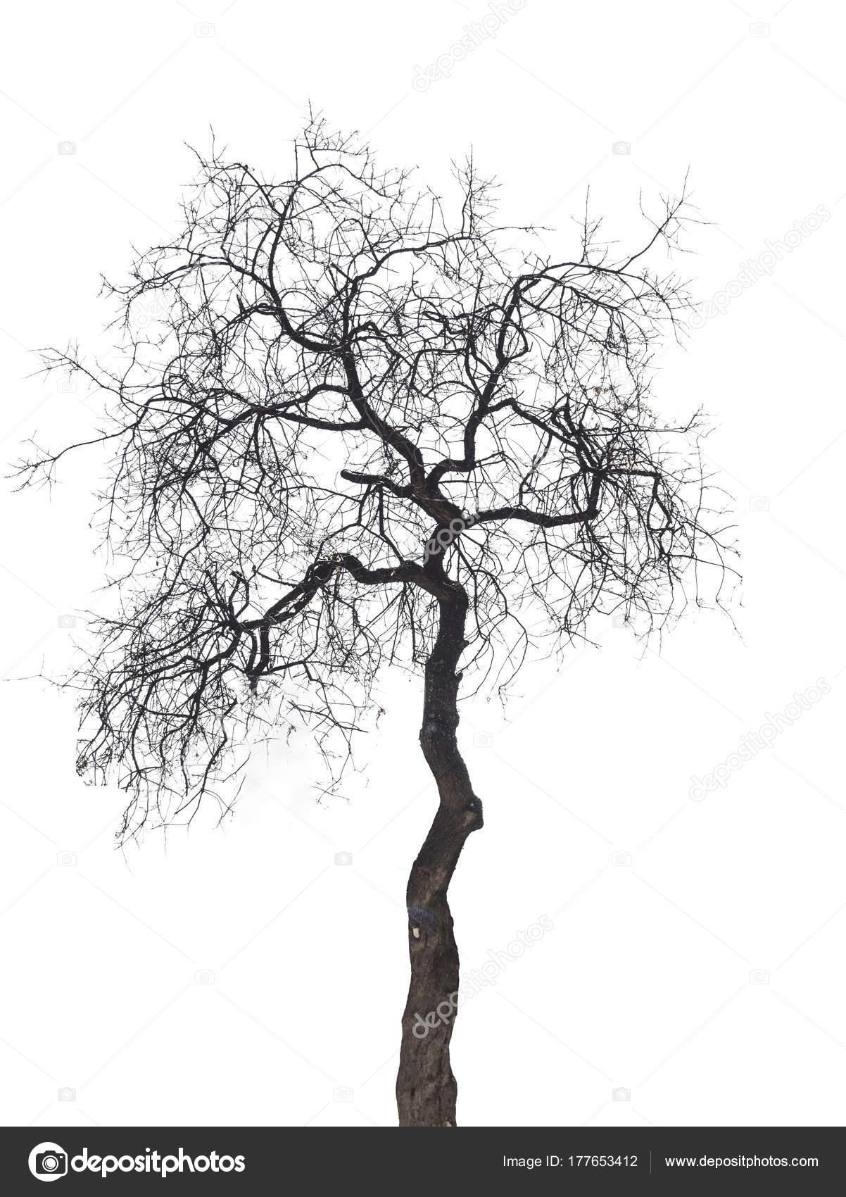 Baum Ohne Blätter Mit Weißer Farbe Isoliert — Stockfoto © osonmez2 ...