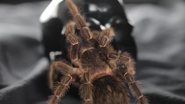 Spider.Studio girato