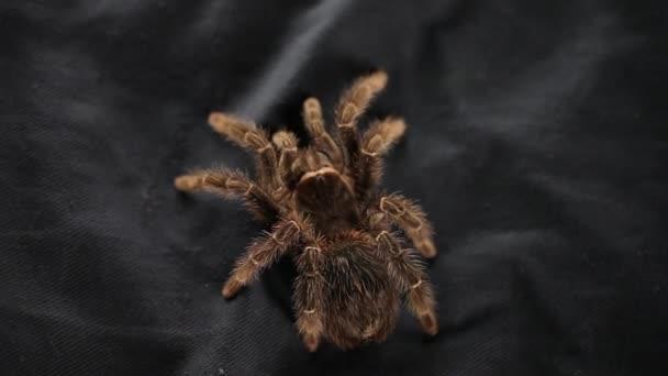 Lövés Spider.Studio