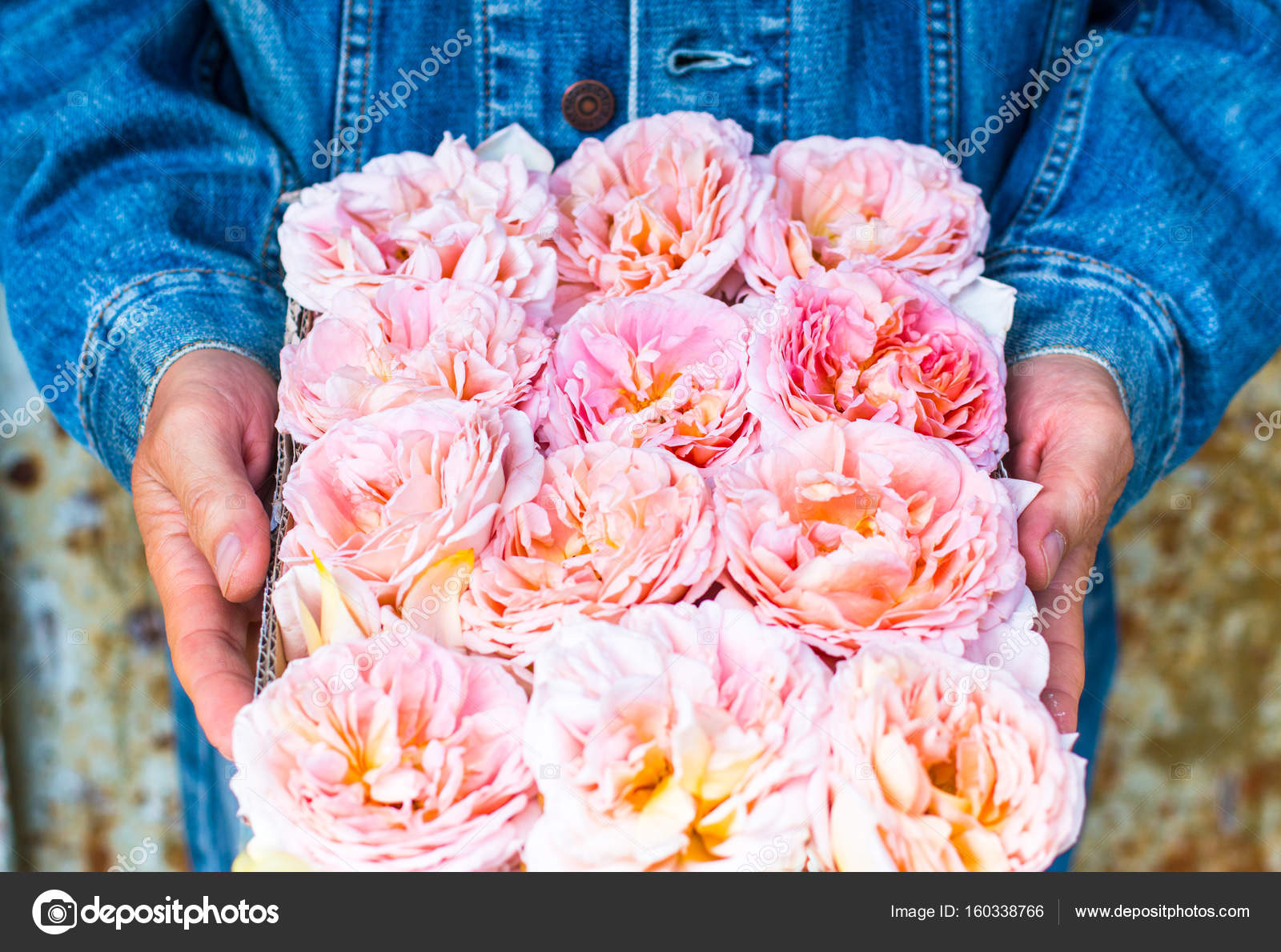 Peach Pink Roses Box Delivery Flowers Gift Man Courier Stock Photo