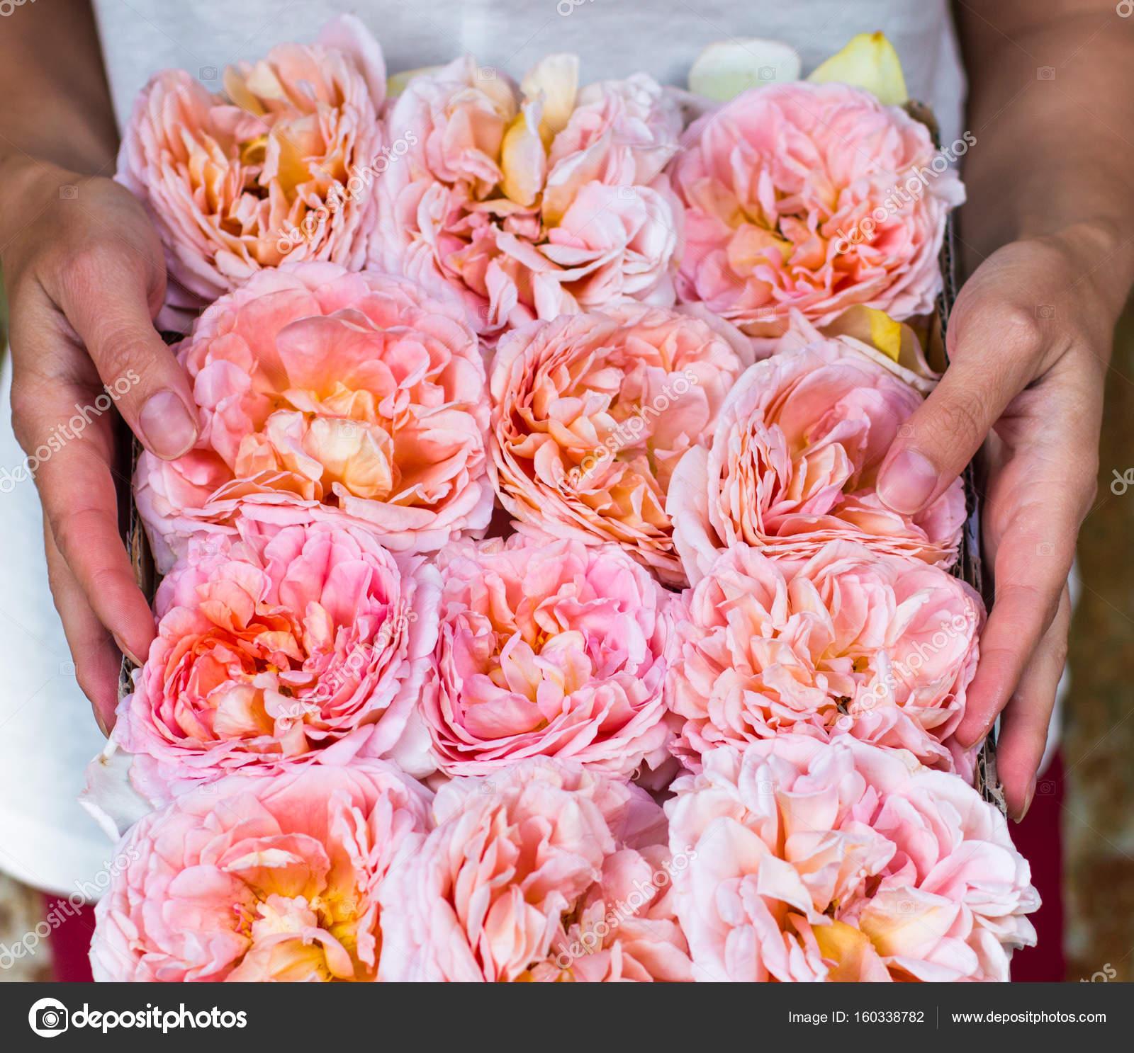 Peach Pink Roses Box Flowers Gift Gardener Stock Photo Iri Shy